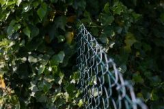 NATURE-REBELLE_JC-Pinsello