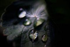 TRANSPARENCE_Natacha-Limodin
