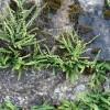 Venez découvrir les extraordinaires plantes sauvages des rues !